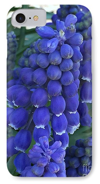 Miniture Grape Hyacinths IPhone Case