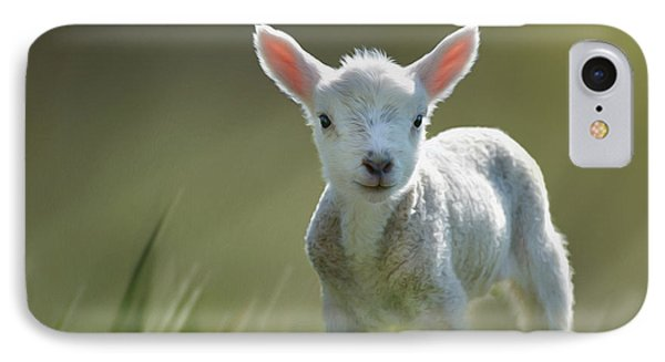 Minnie The Spring Lamb IPhone Case