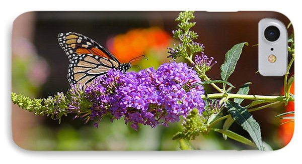 Monarch Butterfly On The Butterfly Bush IPhone Case