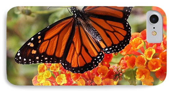 Monarch On 2 Flowers IPhone Case