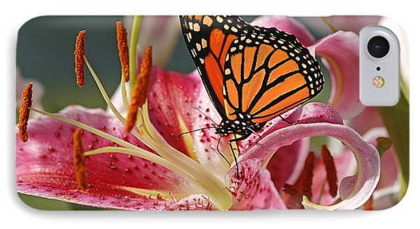 Monarch On A Stargazer Lily IPhone Case