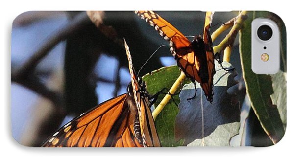 Monarch On Eucalyptus IPhone Case