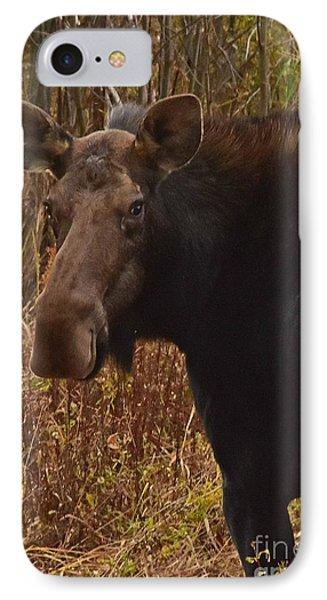 Moose Portrait IPhone Case
