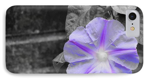 Morning Glory Flower IPhone Case