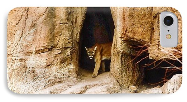 Mountain Lion In The Desert IPhone Case