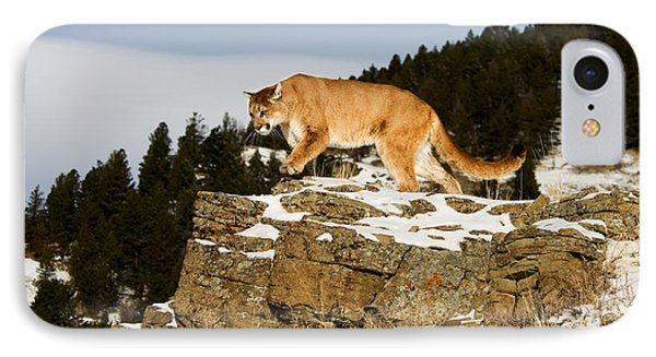 Mountain Lion On Rocks IPhone Case
