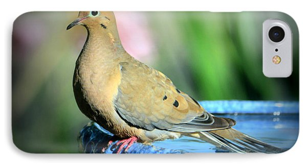 Mourning Dove Perched IPhone Case