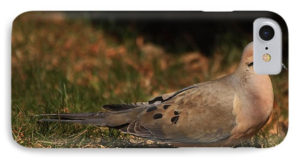Mourning Dove Spring 2012 IPhone Case