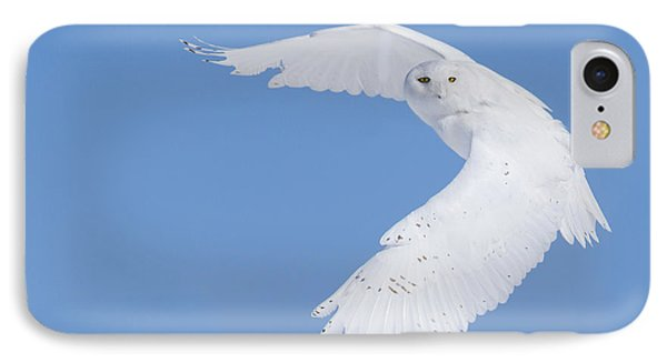 Mr Snowy Owl IPhone Case