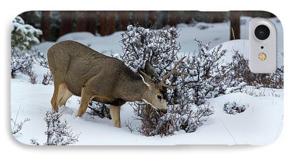 Mule Deer - 9130 IPhone Case