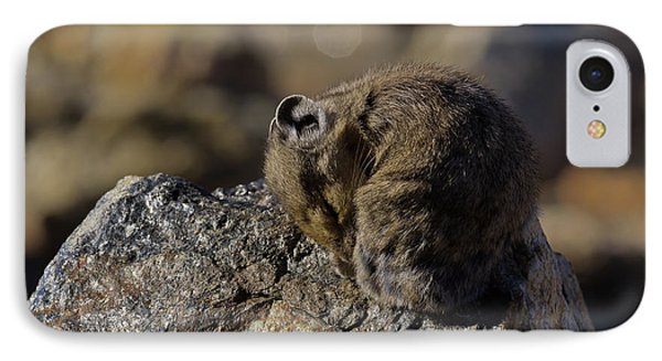Napping American Pika - 4694 IPhone Case