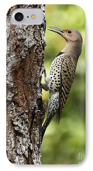 Northern Flicker On The Hunt IPhone Case