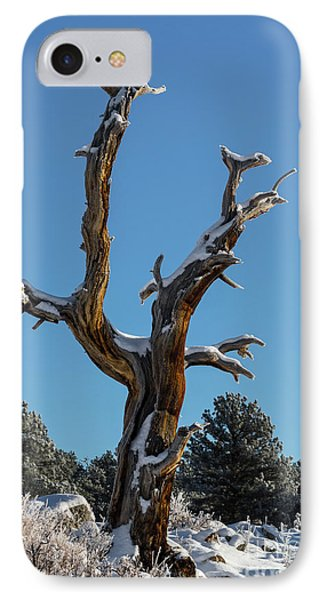 Old Tree - 9167 IPhone Case
