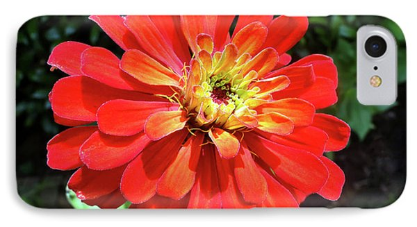 Orange Burst Zinnia IPhone Case