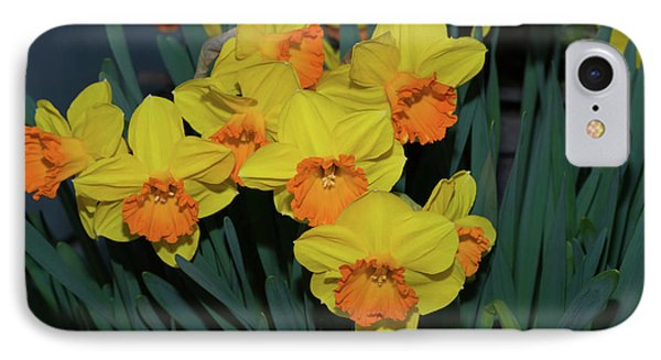 Orange-centered Daffodils IPhone Case