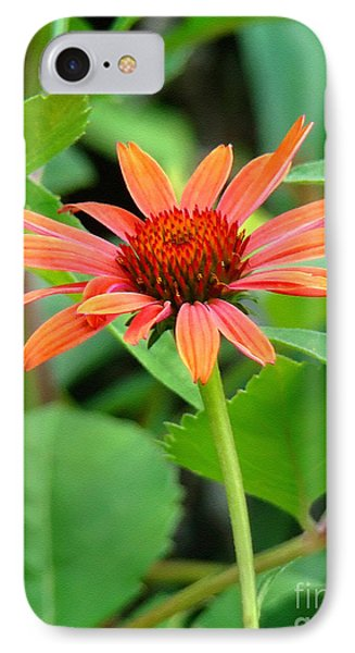 Orange Coneflower IPhone Case