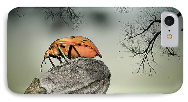 Orange Stink Bug 001 IPhone Case