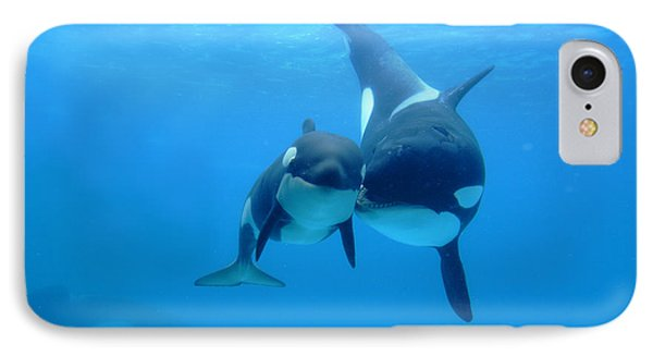Orca Orcinus Orca Mother And Newborn IPhone Case