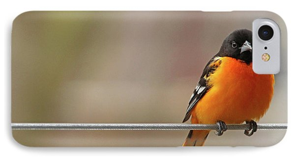 Oriole On The Line IPhone Case