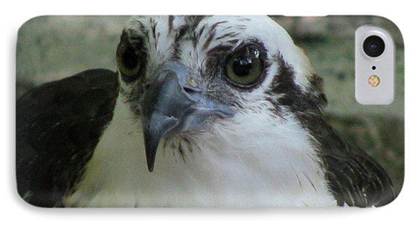 Osprey Portrait IPhone Case