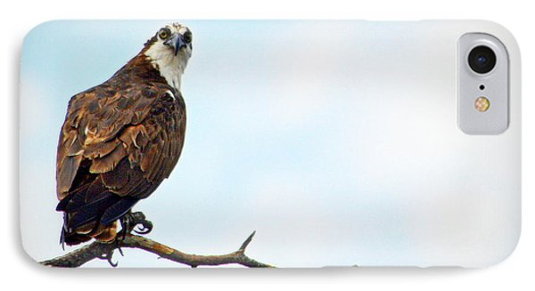 IPhone Case featuring the photograph Osprey Out On A Limb by AJ Schibig
