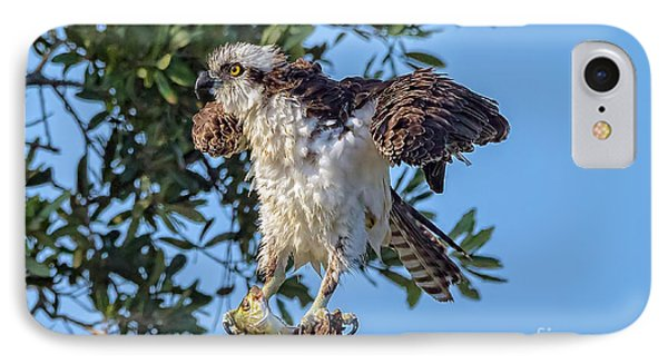Osprey With Meal IPhone Case