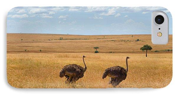 Ostrich IPhone Case