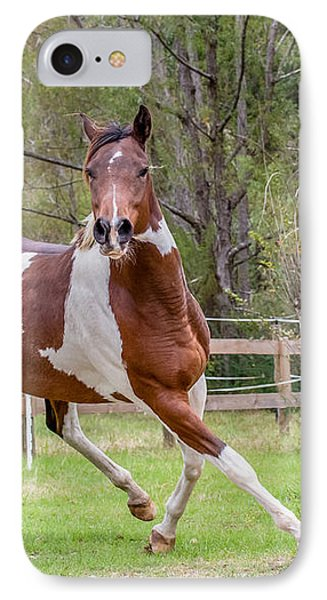 Paint Mare In Field IPhone Case