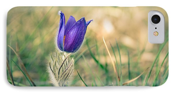 Pasque Flower IPhone Case