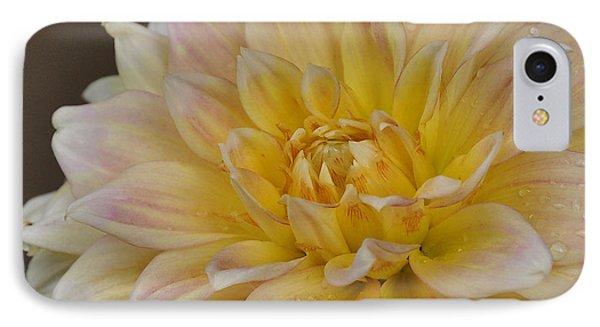 Peaches And Cream Dahlia IPhone Case