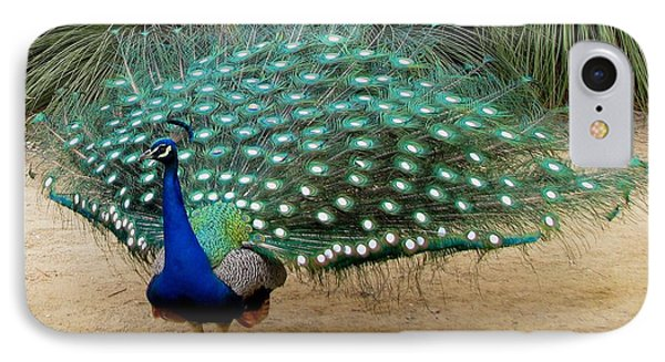 Peacock Showing All Feathers IPhone Case