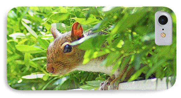Peek-a-boo Gray Squirrel IPhone Case
