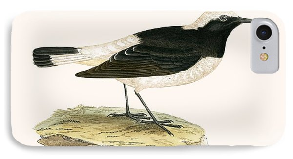 Pied Wheatear IPhone Case