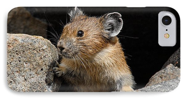 Pika Looking Out From Its Burrow IPhone Case