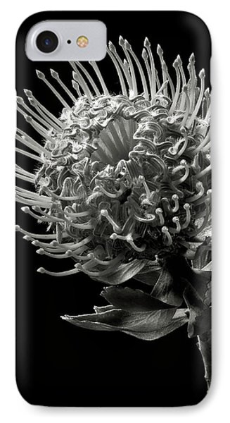 Pincushion Protea In Black And White IPhone Case