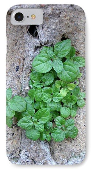 Plant In Stone Naples Italy IPhone Case