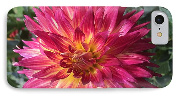 Pointed Dahlia IPhone Case