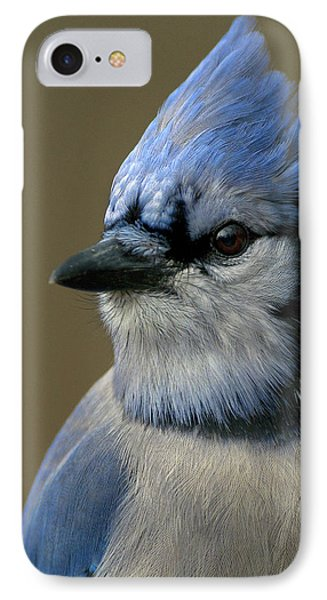 Portrait Of A Bluejay IPhone Case