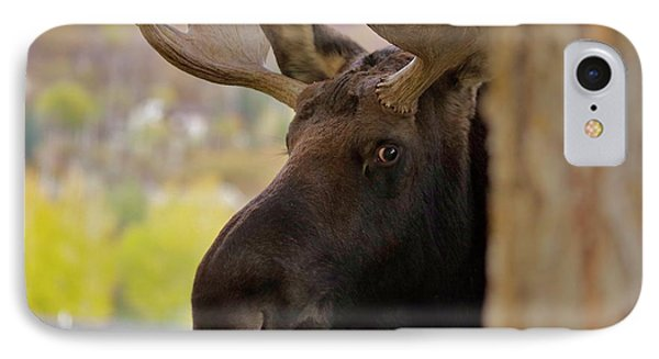 Portrait Of A Bull Moose IPhone Case