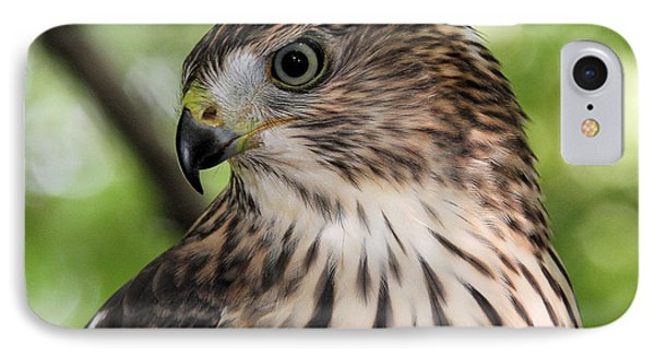 Portrait Of A Young Cooper's Hawk IPhone Case