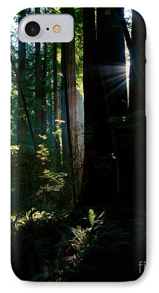Prairie Creek Redwoods State Park 6 IPhone Case