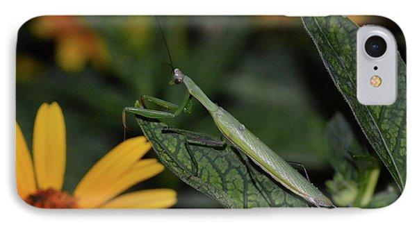 Pray Mantis Dinner Time  IPhone Case