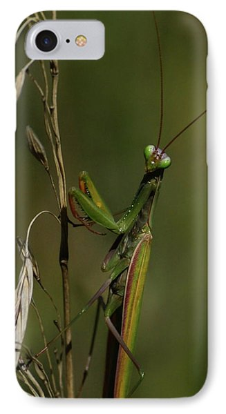 Praying Mantis 2 IPhone Case
