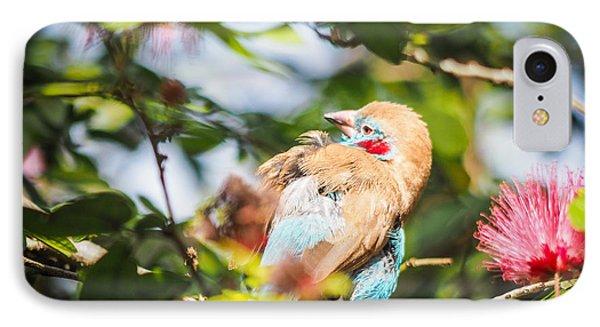 Red Cheeked Cordon Bleu Finch IPhone Case