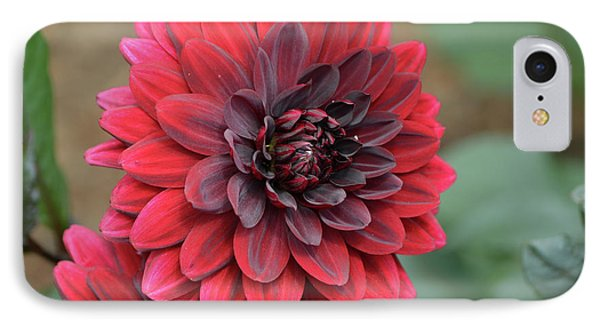 Pretty Blooming Red Dahlia Flower Blossom IPhone Case