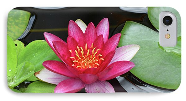 Pretty Red Water Lily Flowering In A Water Garden IPhone Case