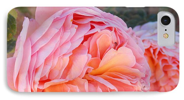 Princess Margret Fragrant Climbing Roses IPhone Case