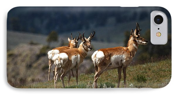 Pronghorns IPhone Case