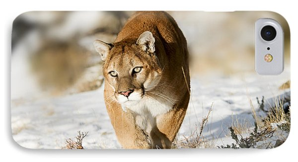 Prowling Mountain Lion IPhone Case