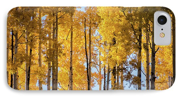 IPhone Case featuring the photograph Pure Golden Tree Tops  by Saija Lehtonen